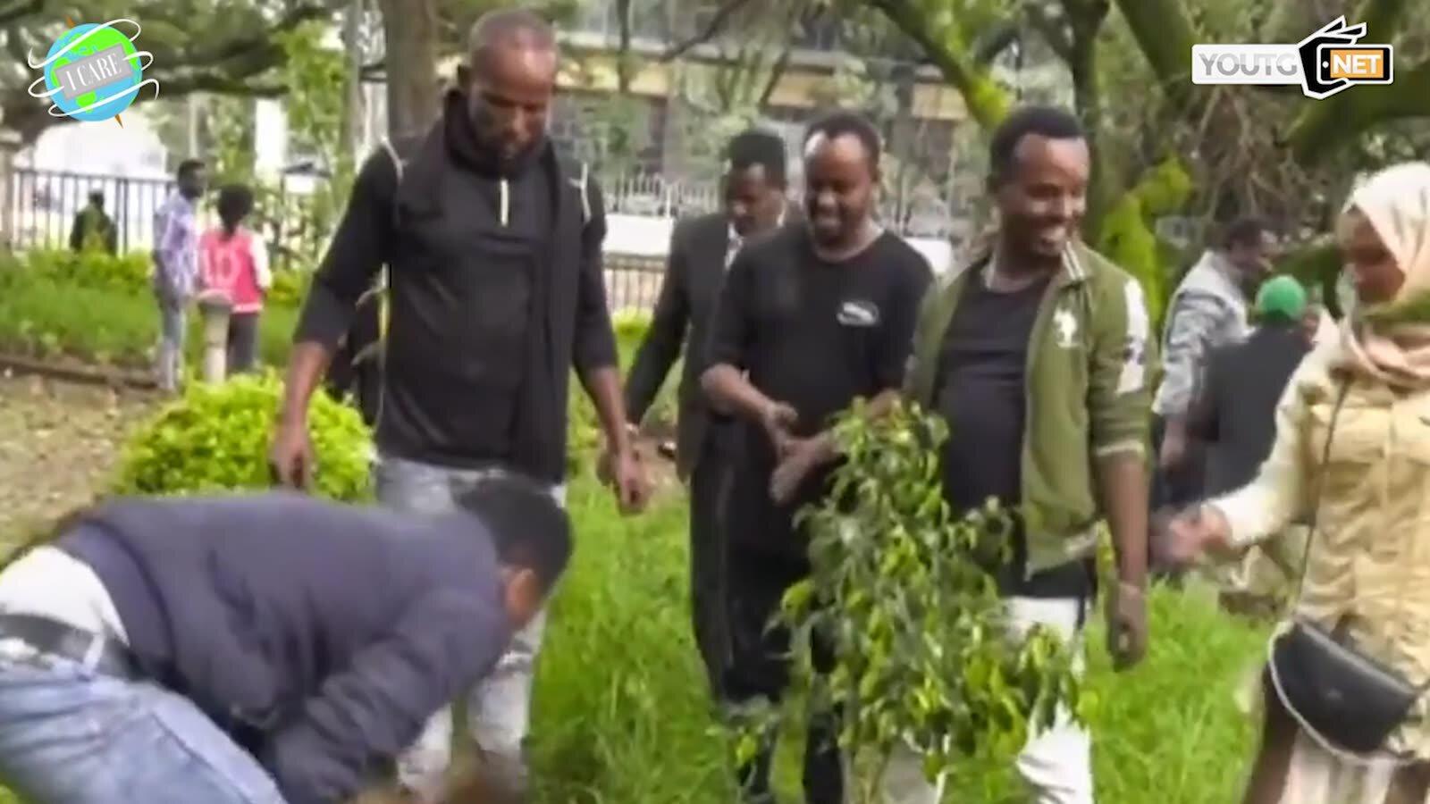 In Etiopia piantati 350 milioni di alberi in un giorno